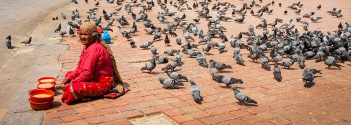 The pigeon lady offering feed for her flock
