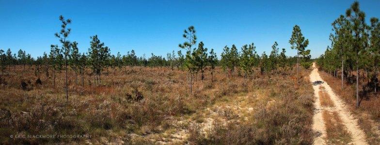 Apalachicola Bluffs and Ravines Preserve