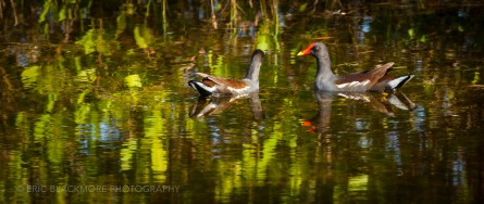 Birds at Merritt Island National Wildlife Refuge, Black Point Drive and Bio Lab Road